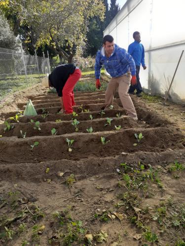 Plantación en el huerto