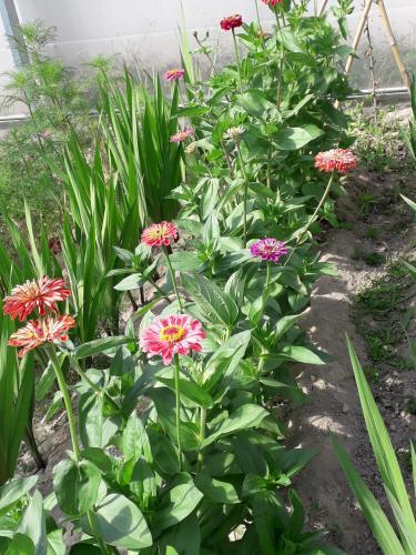 Flores del invernadero